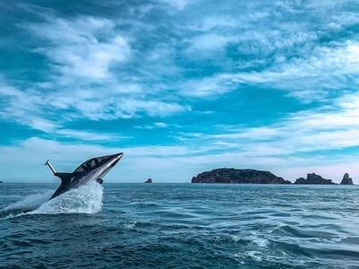 SPORTS & FUN - Radikal Shark